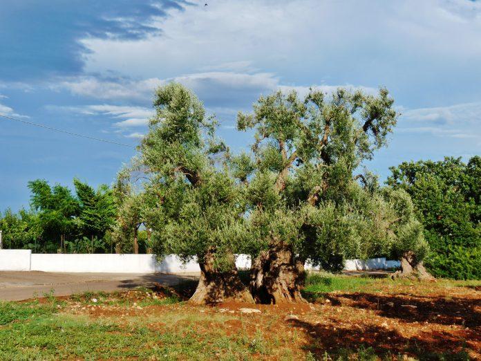 Parco archeologico Santa Maria di Agnano