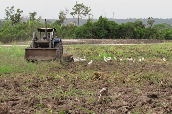 taranto lavoro agricolo