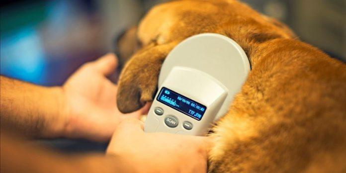 Taranto, al via la MicrochipDay - giornata di applicazione gratuita del microchip ai cani