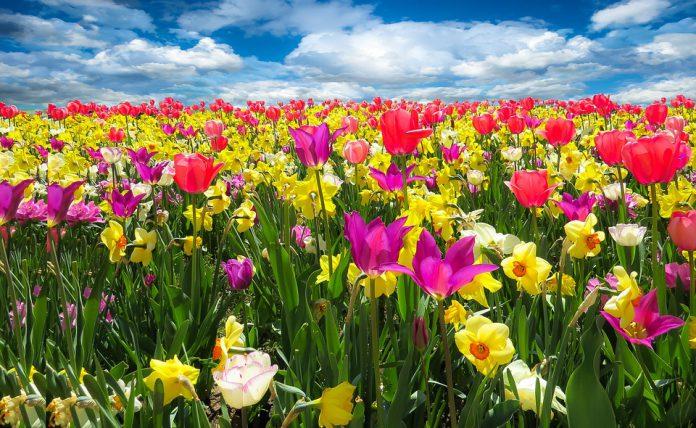 Taranto-primavera