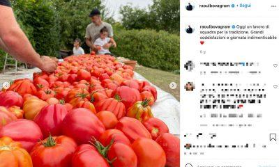 Raoul Bova raccoglie pomodori