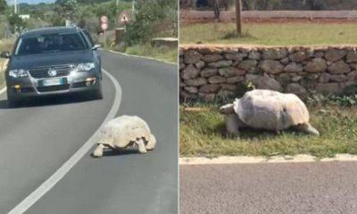 Avvistata in Puglia una tartaruga gigante africana